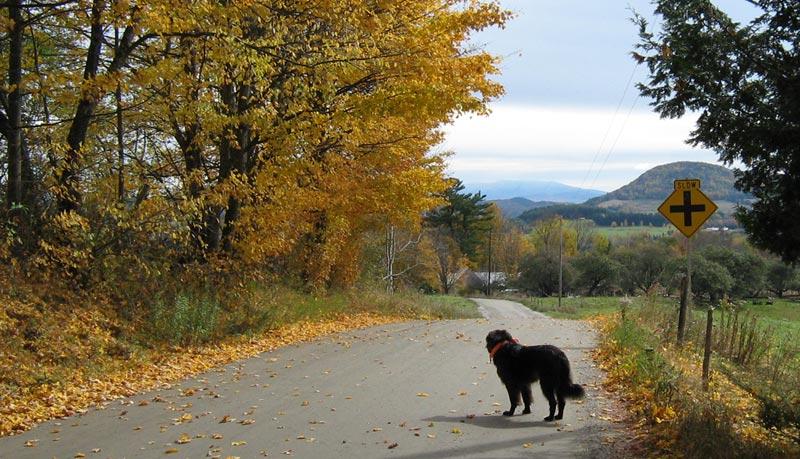 a black dog on a road near the Hardwick Veterinary Clinic