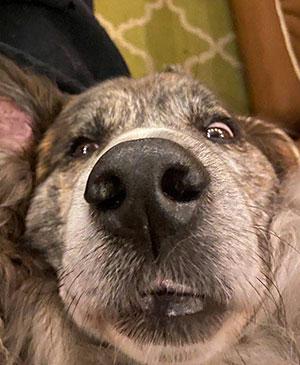 Sonja Poirier's dog
